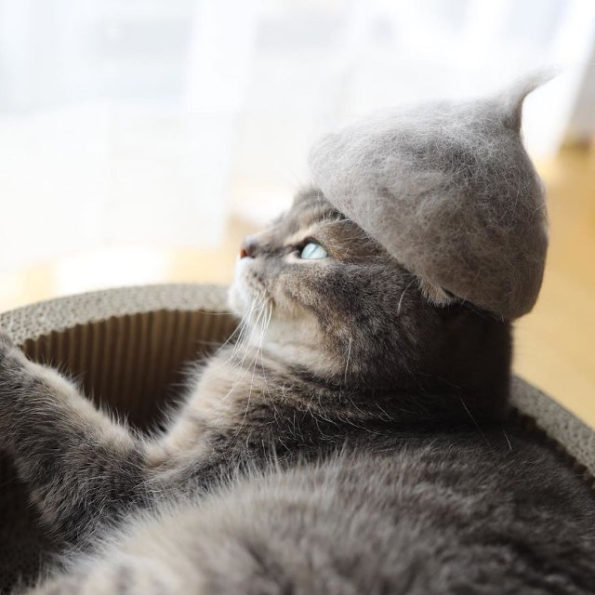 cats-wearing-cat-hats-9
