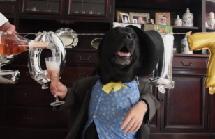 Cheers To New Year's Dog & More Incredible Links