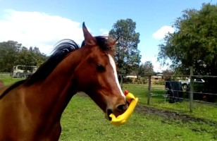 A Horse Playing With A Squeaky Toy Is So Ridiculous It's Perfect