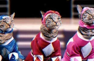 Wow, Check Out The Mighty Morphin Meower Rangers