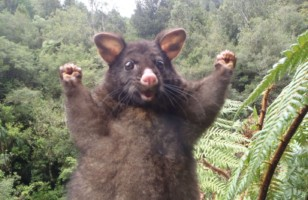 Meet Optimistic Possum & More Incredible Links