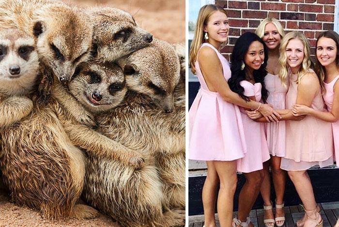 We Can No Longer Ignore That Sorority Girls Pose Like Meerkats