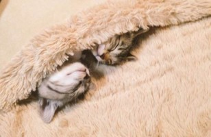 You Have To See These Kittens Cozied Up In A Foot Warmer