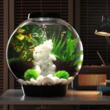 Aquarium & Terrarium Collection