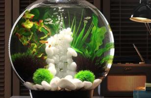 Unique Aquariums And Terrariums For Your Home