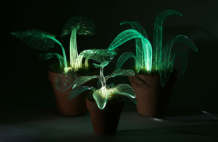 Glow In The Dark Plants Prove We're Living In The Future
