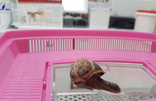 Some Vets Repaired A Snail's Shell After It Was Stepped On :)