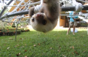 You've GOT To See This Video Of Baby Sloths Talking