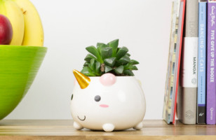 Here's The Unicorn Planter You've Always Dreamed Of