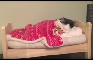 Watch A Cat Tuck Herself Into Her Miniature People Bed