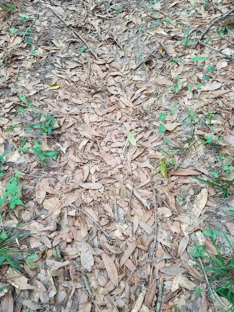 Can You Spot The Snake In This Image? & More Incredible Links