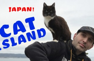 This Video Shows What It's Like To Visit Cat Island