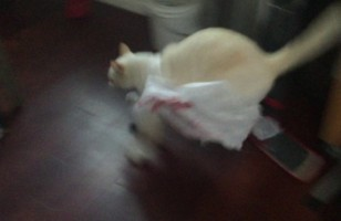A Cat Messes With A Plastic Bag And Immediately Regrets It