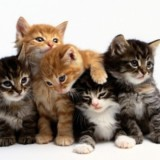 Tickets To CatCon