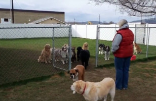These Dogs Wait Patiently For Their Own Name To Be Called