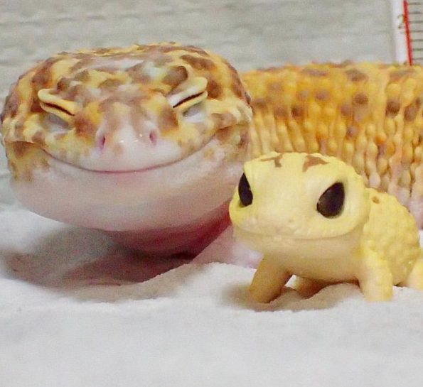 The Happy Gecko And His Gecko Toy & More Incredible Links