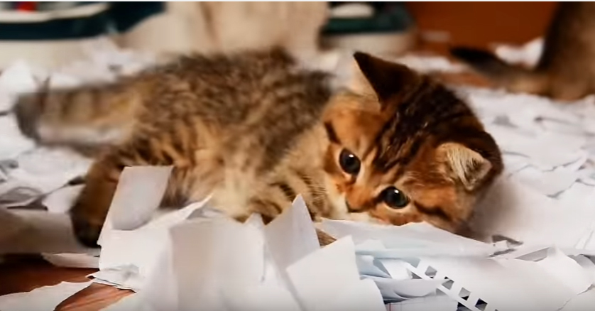 Watch Kittens Playing In A Pile Of Paper And Try Not To Smile
