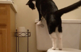 A Cat Flushing A Toilet Over And Over Is A Metaphor For Life