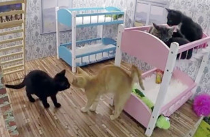 Iceland's New Cat Reality Show & More Incredible Links