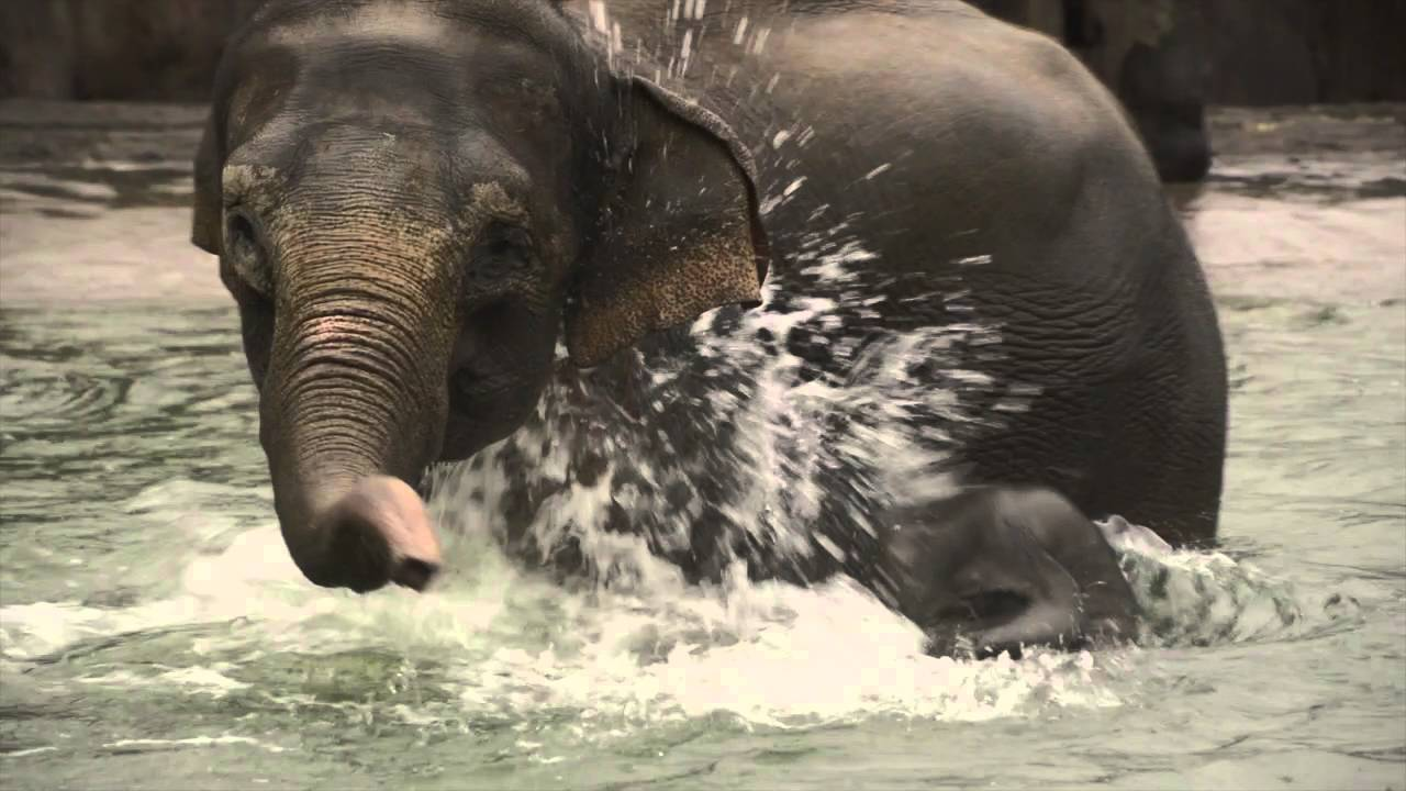 This Elephant Showing Off Her Swimming Skills Is Adorable