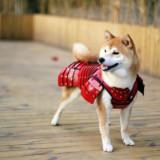 Sumarai Armor For Pets