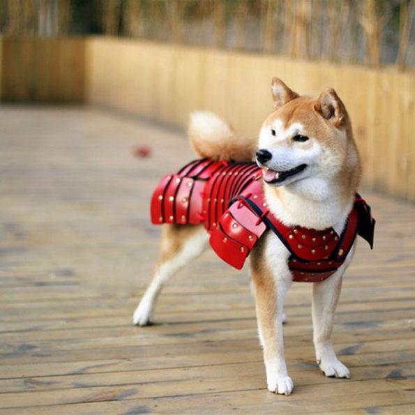Samurai Armor For Pets Is A Real Thing You Can Buy Now