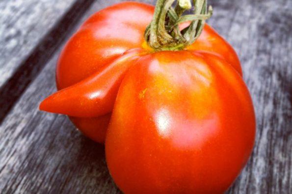 Vulgar Vegetable Contest of Keen Gardeners