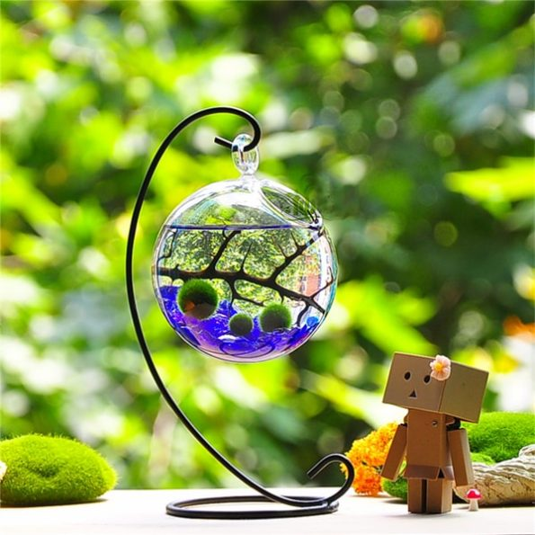 Marimo Aqua Terrarium Kit for Home or Office