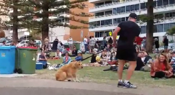 Dog Plays Dead So She don't need to leave the Park