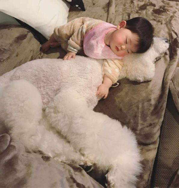 giant dog and baby friendship