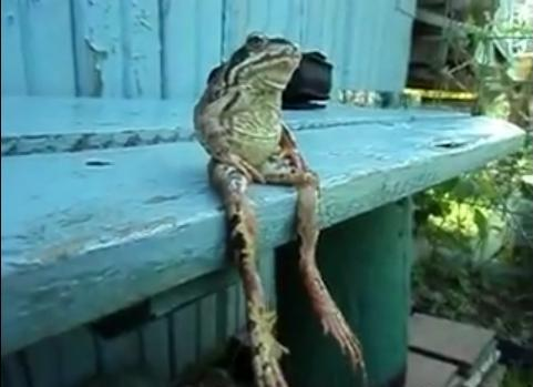 Frog Looks Like Human When He Sits on Bench