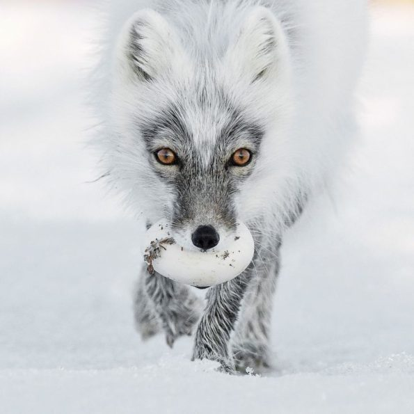 Top 13 Wildlife Photos 2017