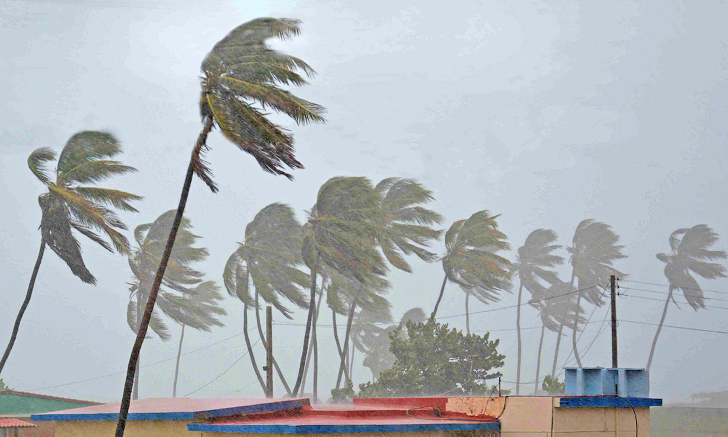 How Does The Mighty Palm Trees Usually Stay Standing In Storms?