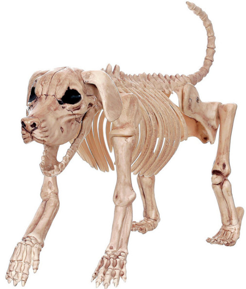 Halloween Bonez Skeleton Dog