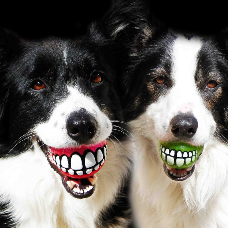 Hilarious Ball Toy for Dogs