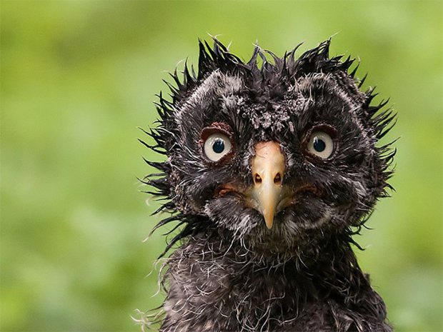 Perfect Animals Pictures Captured When They Were Wet