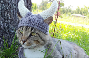 Awesome Pet Hat Fashion Collection
