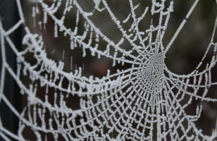 How Spiders Survive in the Winter?