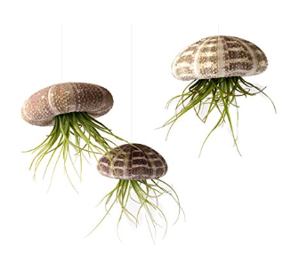 Jellyfish-shaped Plants for Your Home