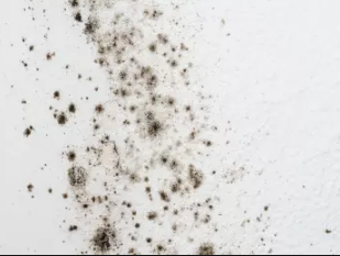 Mold Abatement, Mold Removal and Remediation - What's the Difference?