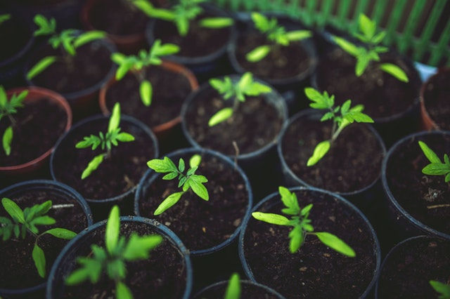 How Greenhouse Gardening Improves Your Mental Health