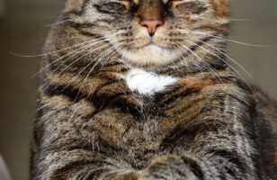 Cat muzzle – to use or not to use?