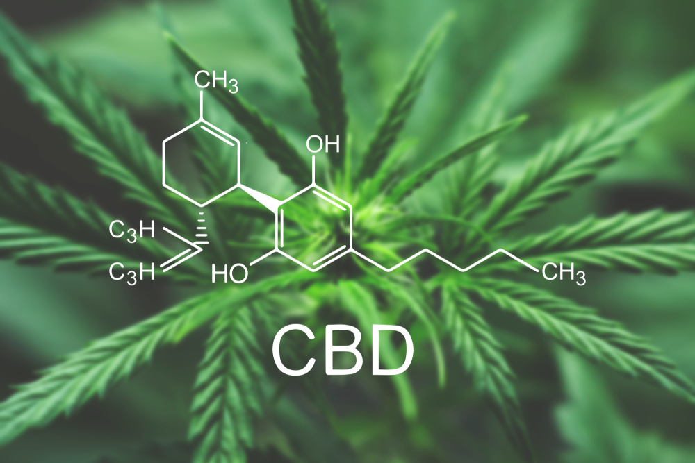 CBD and Weed: Differences & Similarities