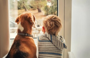 Winter Safety Tips for Your Pets