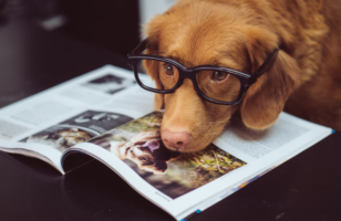 Your Pet and How They Affect Your Homeowners Insurance Policy