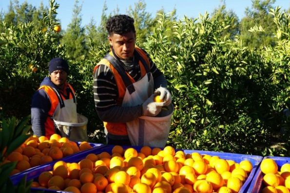Ideas to Boost Fruit Production from Fruit Trees