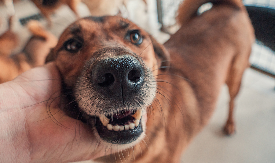 Dog Bite Personal Injury Lawsuit
