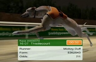Greyhound sports betting in the UK: What to know