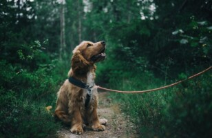 Hip and Joint Supplements to Boost Dog Health