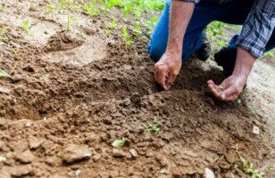 Why Gardening is a Great Hobby at Any Age